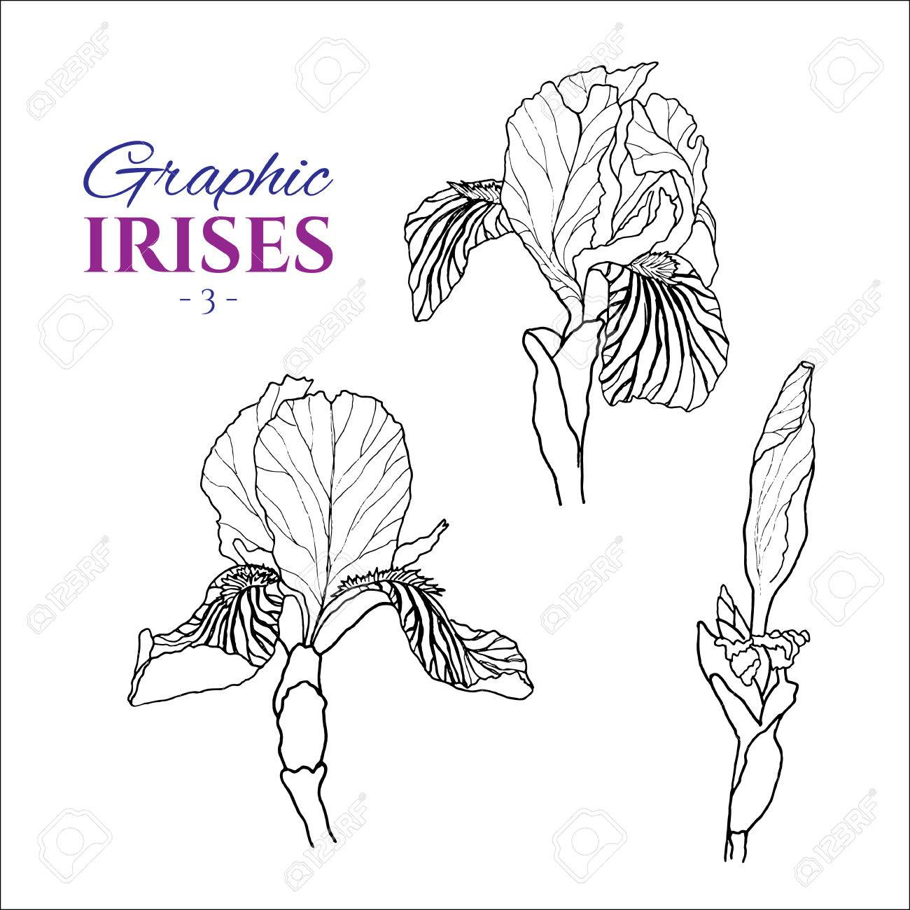 1300x1300 Graphic Illustration Of Irises From Different Angles, Set Part 3