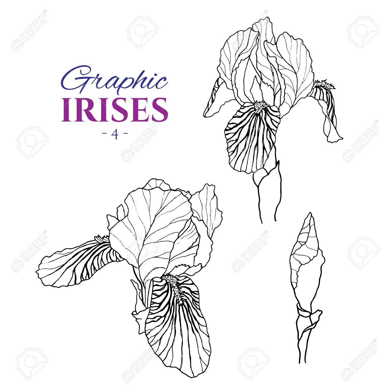 1300x1300 Graphic Illustration Of Irises From Different Angles, Set Part 4