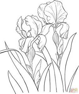 252x300 Line Drawings Of Irises