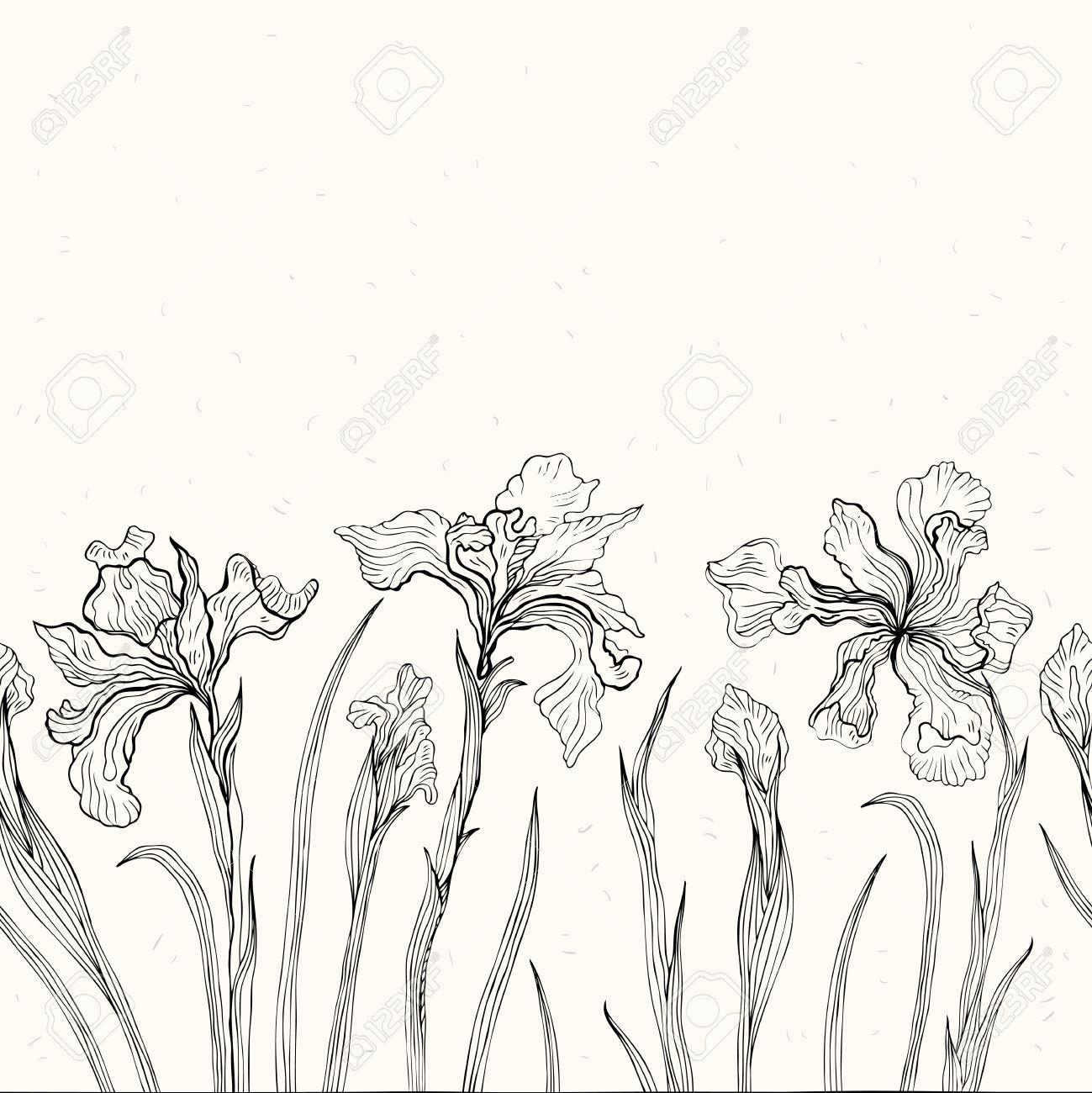1299x1300 Drawn Iris