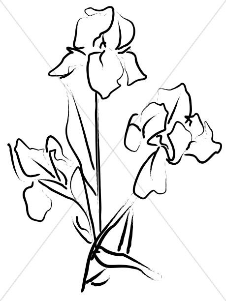459x612 Elegant Iris Sketch Church Flower Clipart