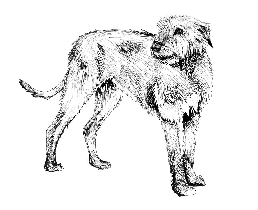 900x734 Irish Wolfhound Drawing By Aria La Faye