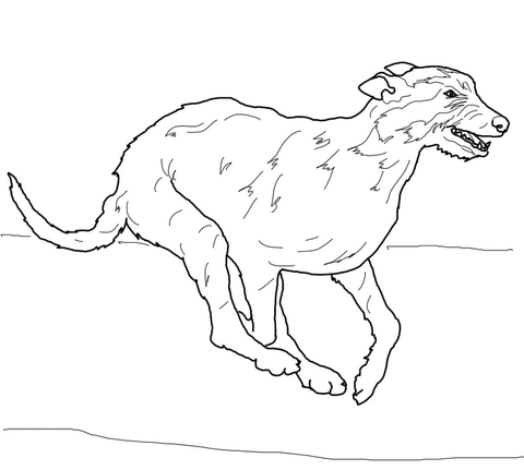 480x431 Irish Wolfhound Coloring Page Free Printable Coloring Pages