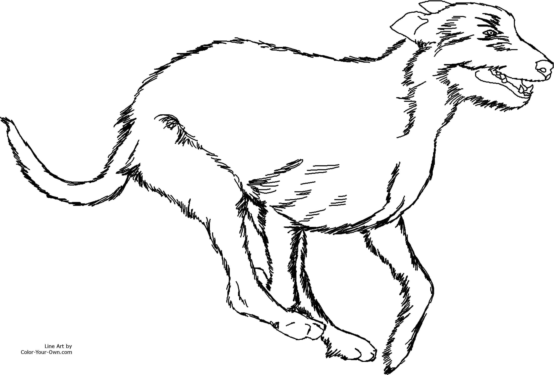 3000x2029 Running Irish Wolfhound Dog Coloring Page