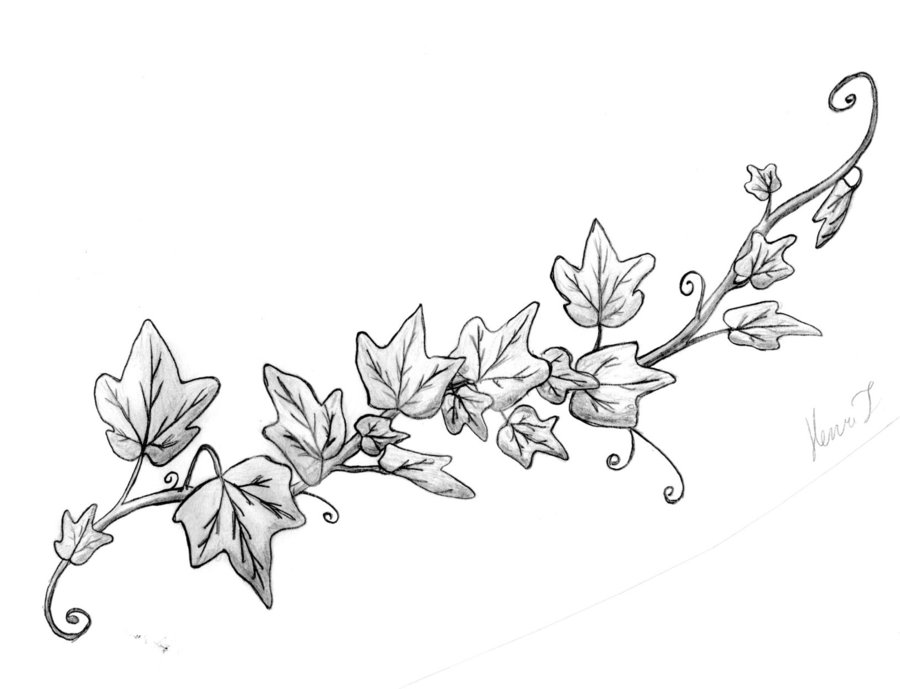 900x689 Image Result For Drawing Ivy Vines 4sketching And Painting