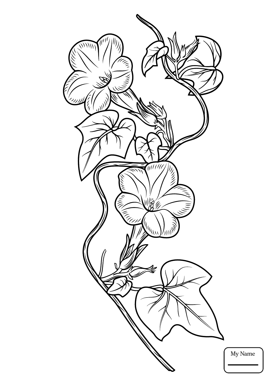 1081x1530 Ivy Leaf Morning Glory Flowers Coloring Pages For Kids