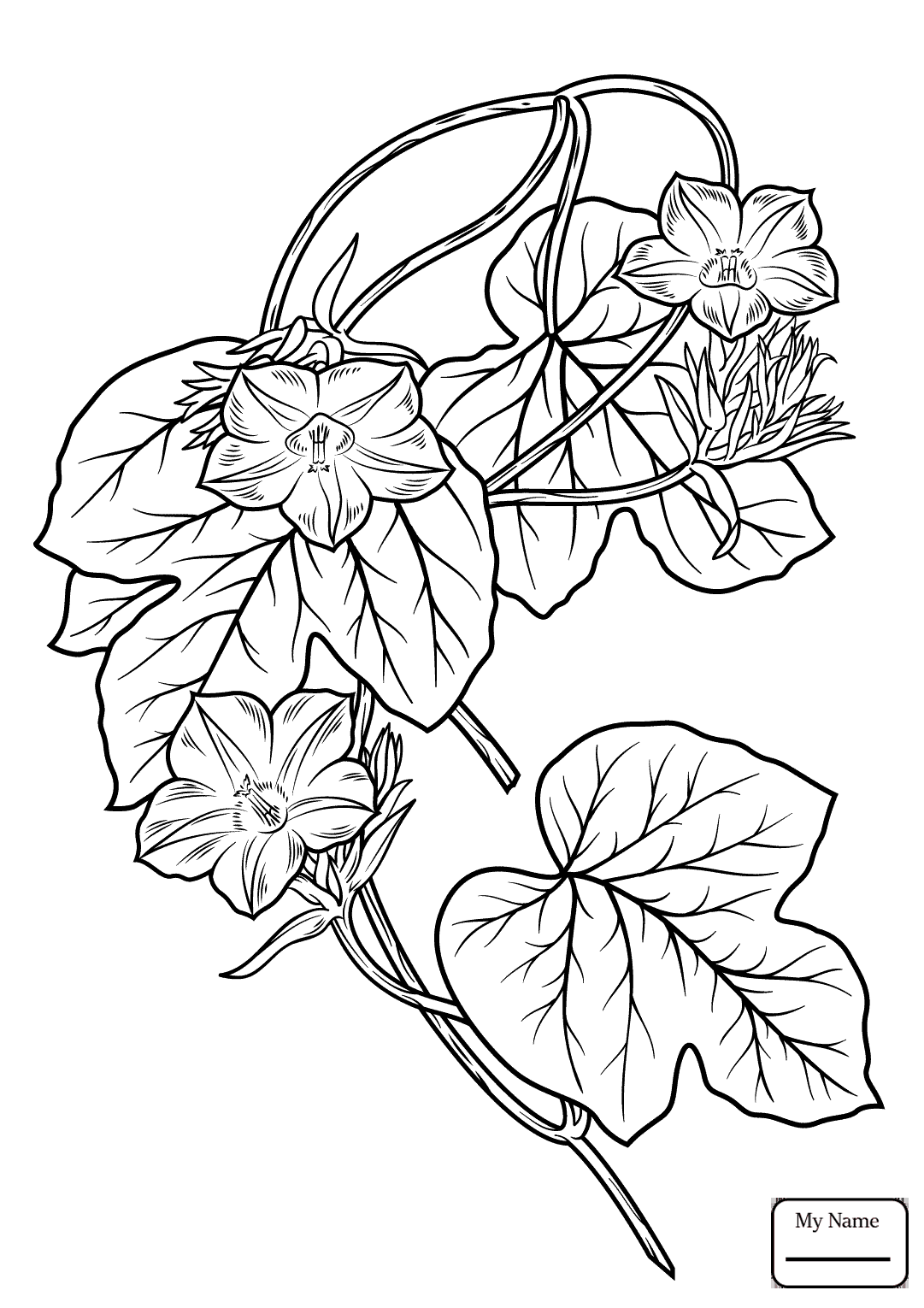 1081x1530 Coloring Pages For Kids Ivy Leaf Morning Glory Flowers