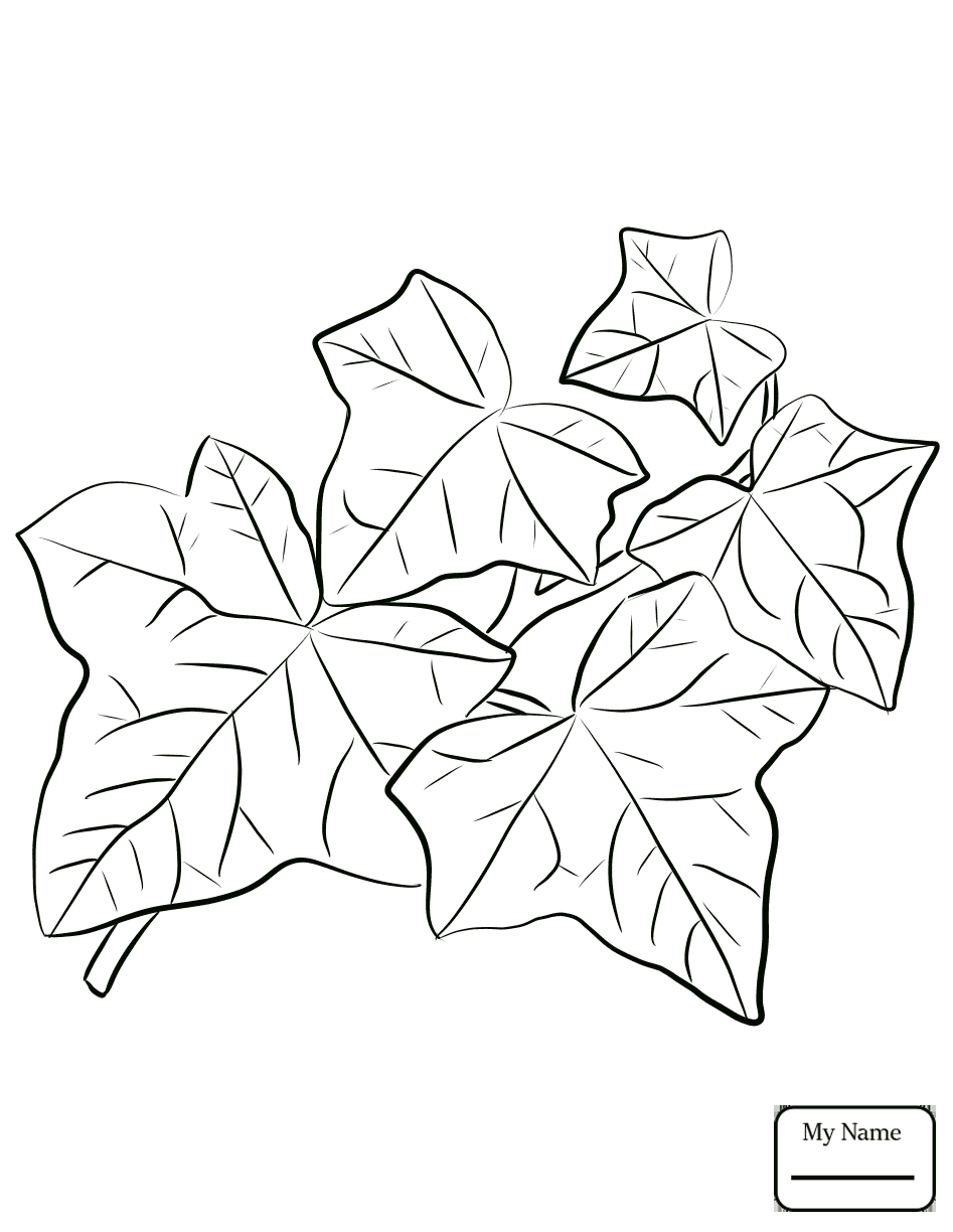 947x1224 Flowers Ivy Common Ivy Leaves Ivy Coloring Pages