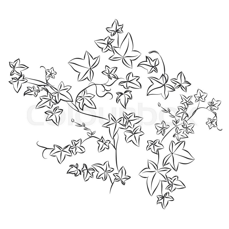 800x800 Black And White Doodle Ivy Leaves. Vector Illustration Stock