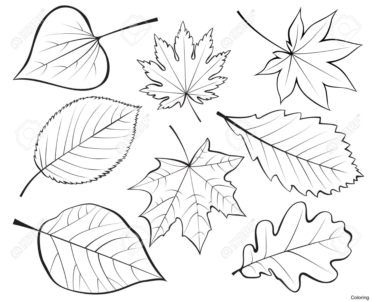 1300x1058 Hd Stock Vector Bamboo Leaves Drawing Of Coloring 21f Falling