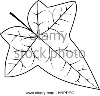 333x320 Ivy, Ivy Leaf, Vector Stock Vector Art Amp Illustration, Vector