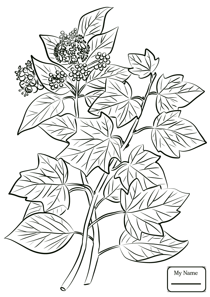 Ivy Leaves Drawing at GetDrawings.com | Free for personal use Ivy ...
