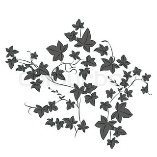 320x320 English Ivy Hedera Helix , Ornamental And Medicinal Plant. Hand