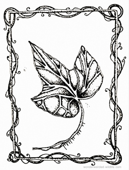 266x350 Ivy Drawings For Our Birth Flowers Of The Month January Collection