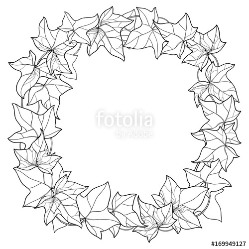 500x500 Vector Wreath With Outline Ivy Or Hedera Foliage. Ornate Leaf