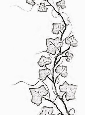 295x400 Collection Of Ivy Tattoo Sample