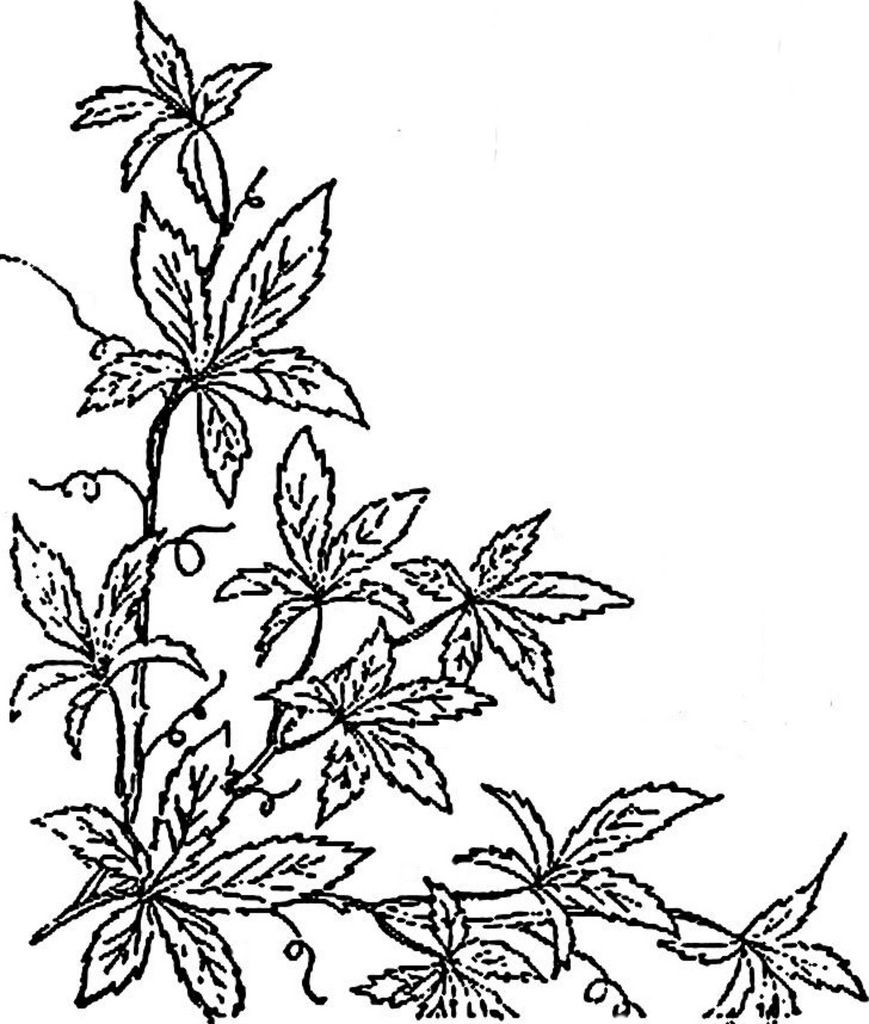 869x1024 1886 Ingalls Ivy Vine Corner This Image Came