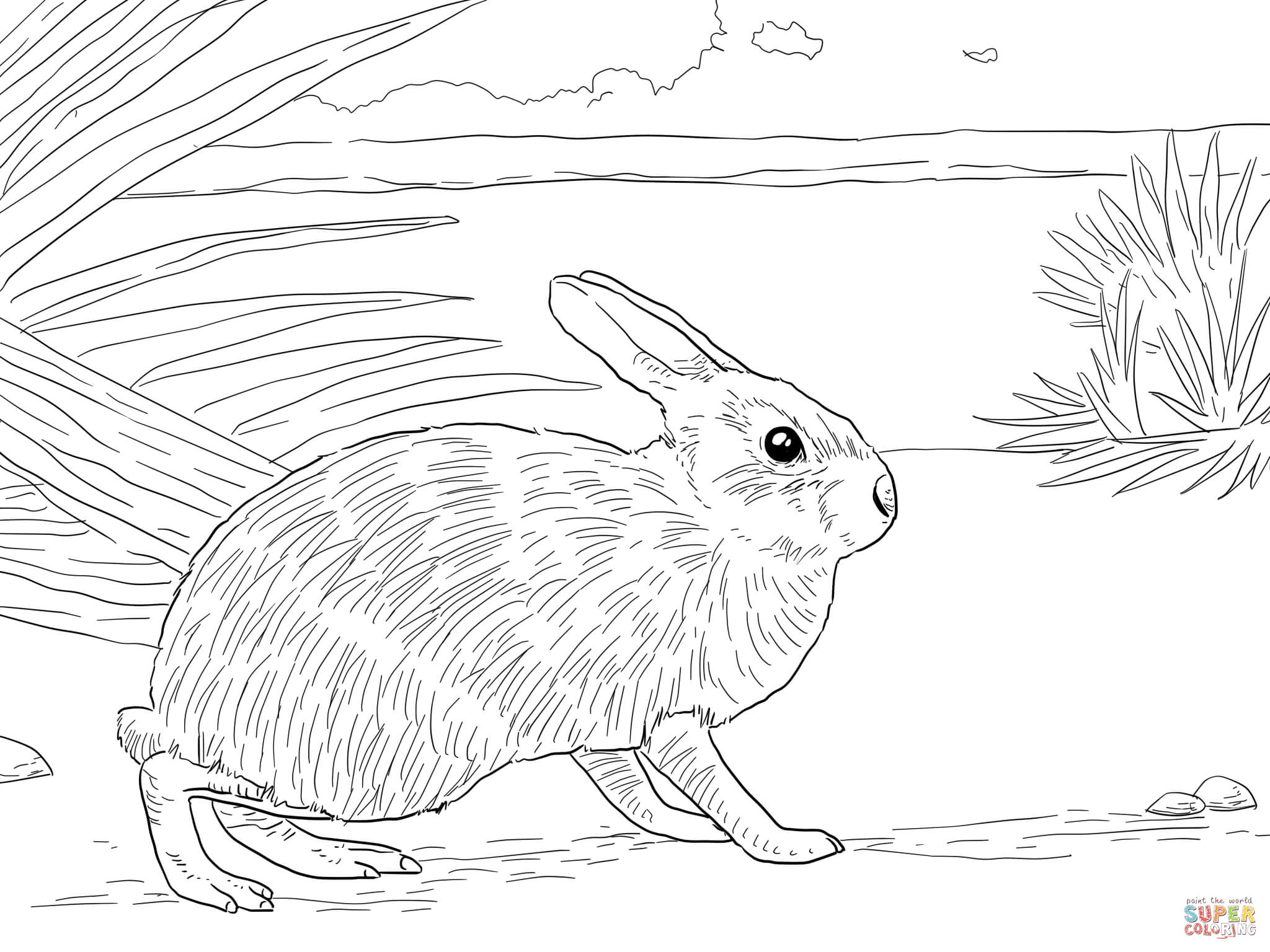 2048x1536 Hare Animal Coloring Pages California Jack Rabbit