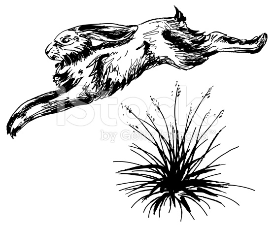 556x461 Jack Rabbit Or Wild Hare Leaping Over A Clump Of Grass. File