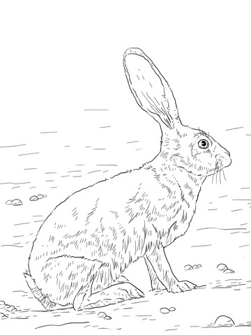 360x480 Black Tailed Jackrabbit Coloring Page Free Printable Pages