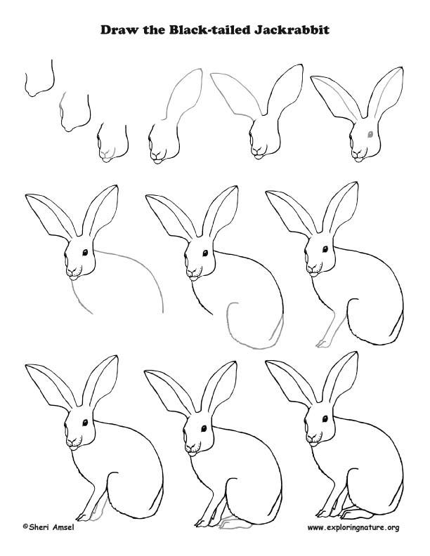 612x792 Jackrabbit Drawing Lesson