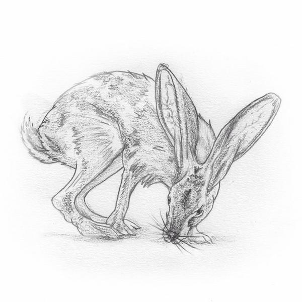 Jack Rabbit Drawing at GetDrawings