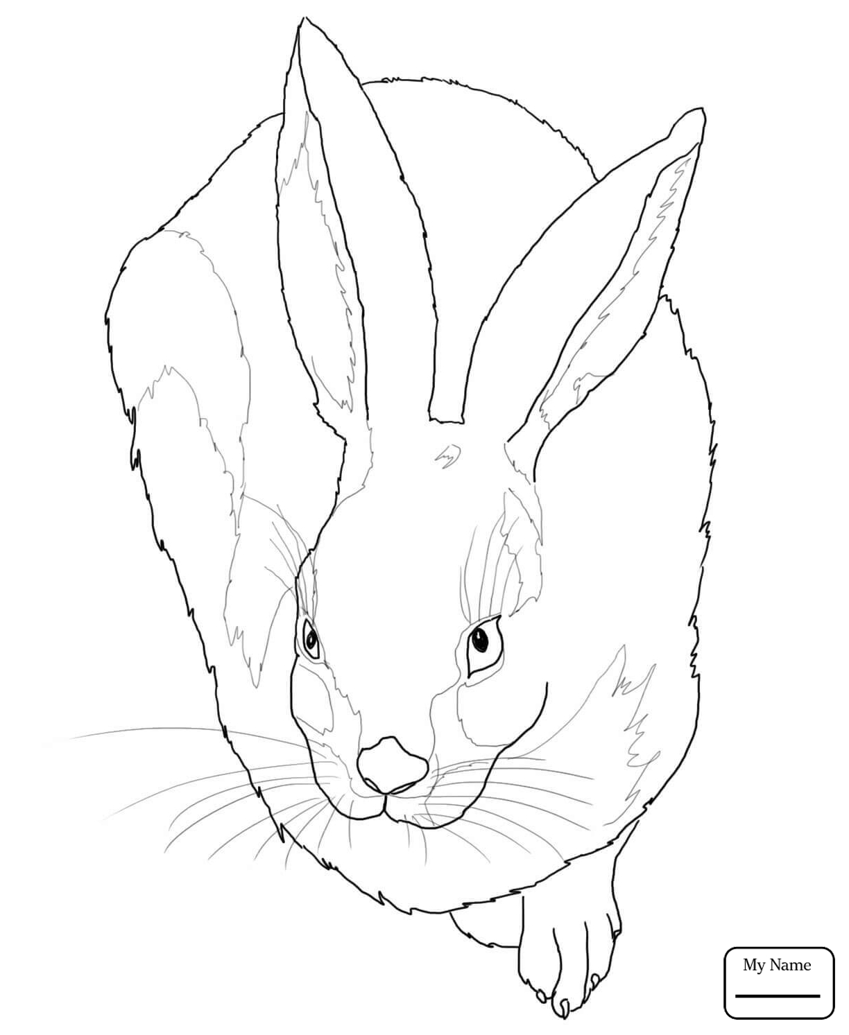 1224x1493 Black Tailed Jackrabbit Mammals Hares Coloring Pages For Kids