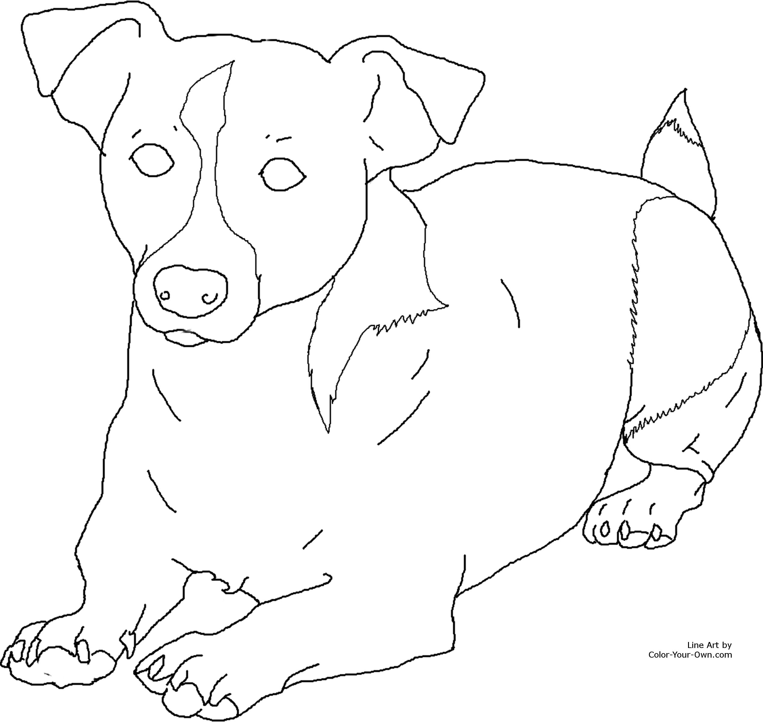 2535x2400 Image Result For Coloring Pages Jack Russell Puppy's Art