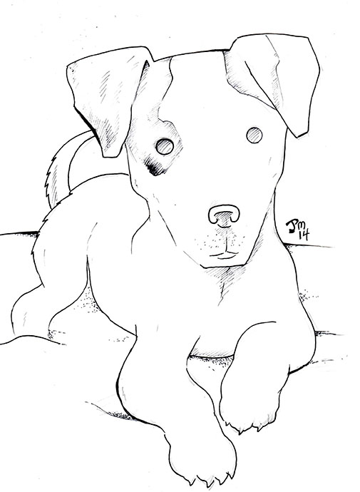 505x690 Jack Russell Terrier By Norrit07