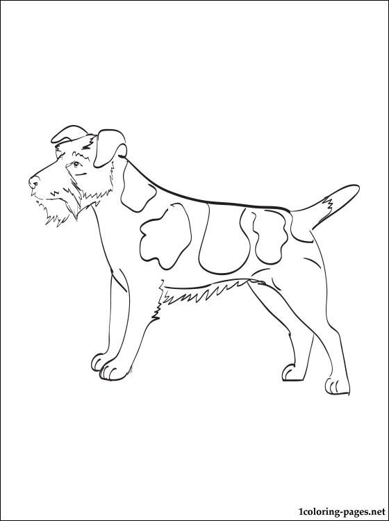 parson terrier color