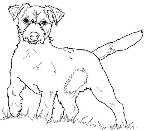 480x439 Jack Russell Terrier Coloring Page Free Printable Coloring Pages