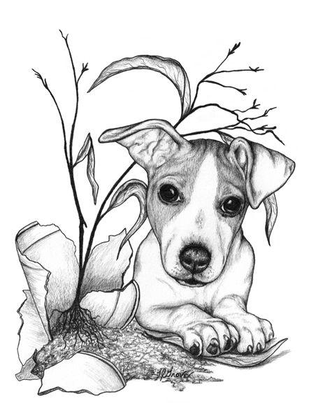 465x576 Pin By Monique Van Beemen On Getekende Dieren Honden