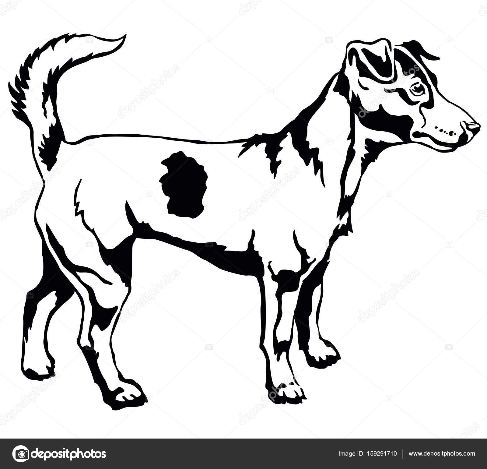 1600x1540 Decorative Standing Portrait Of Dog Jack Russell Terrier Vector