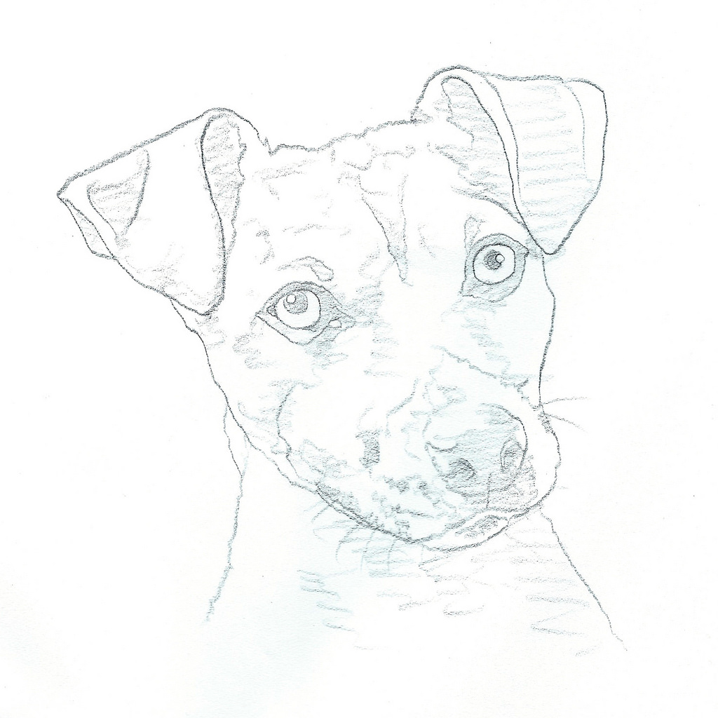 1024x1024 Jack Russell Terrier Sketch Gray Color Pencil On Paper
