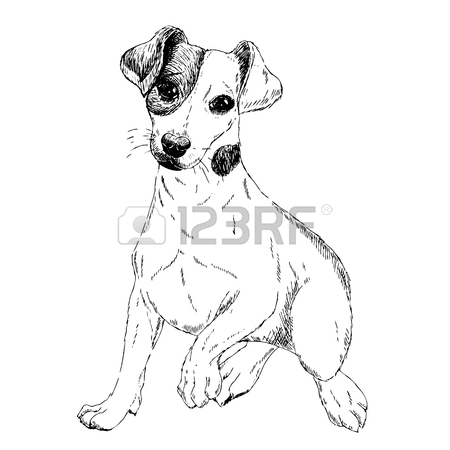 450x450 Portrait Of Jack Russel Terrier Dog. Vector Colored Engraved