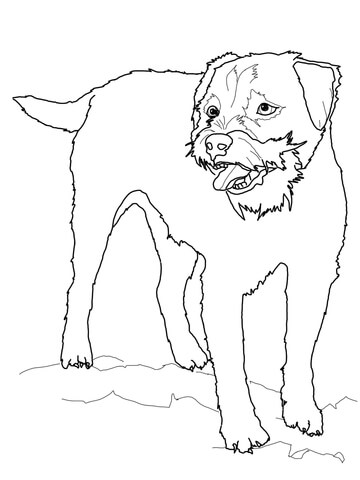 360x480 Border Terrier Coloring Page Free Printable Coloring Pages