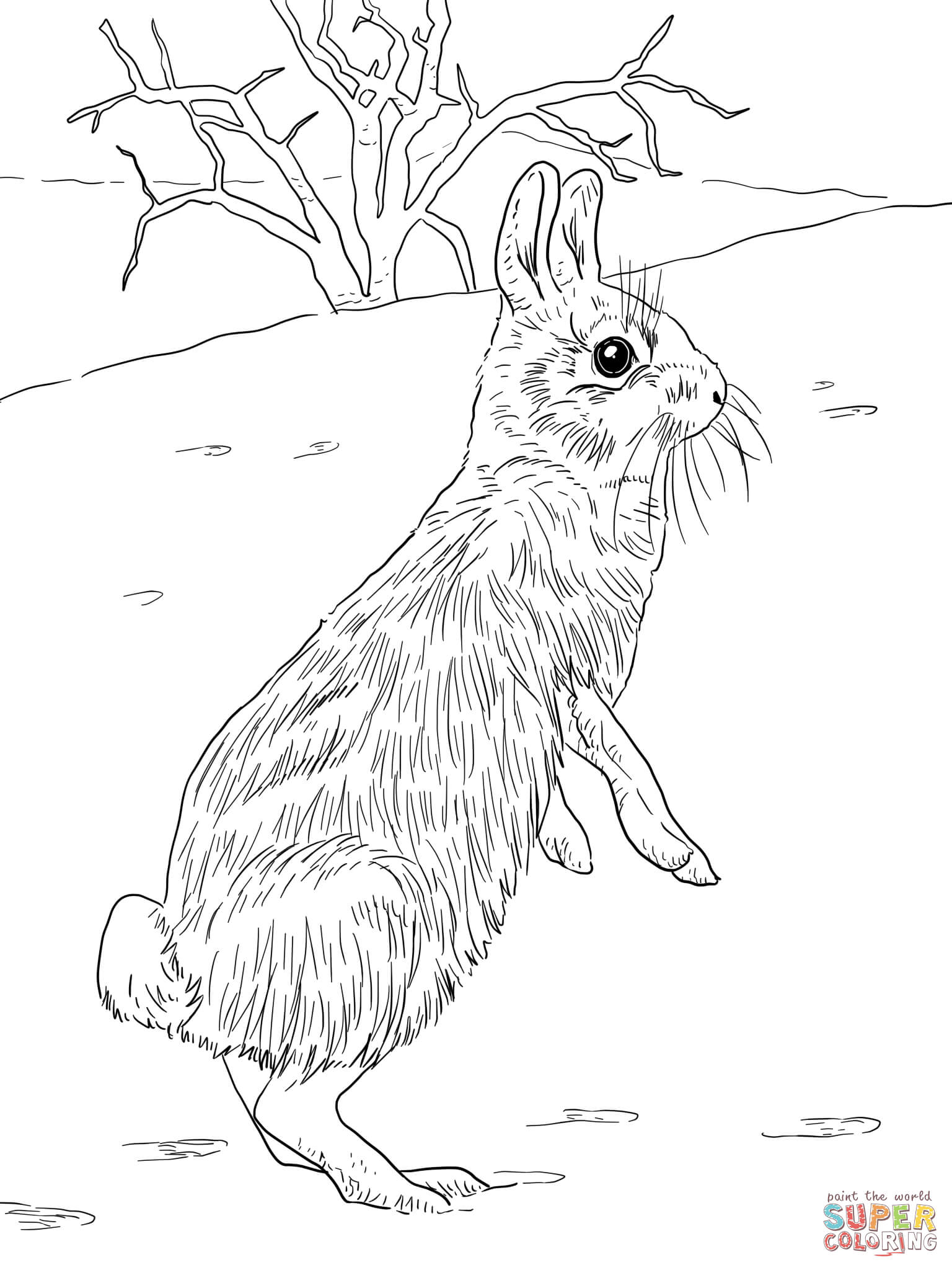 1536x2048 Cottontail Jackrabbit Standing Coloring Page Free Printable