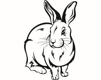 340x270 Jack Rabbit Clipart Hop