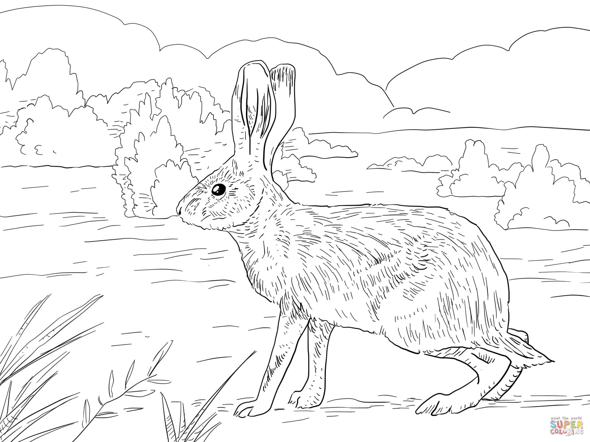2048x1536 Jack Rabbit Coloring Page Free Printable Coloring Pages