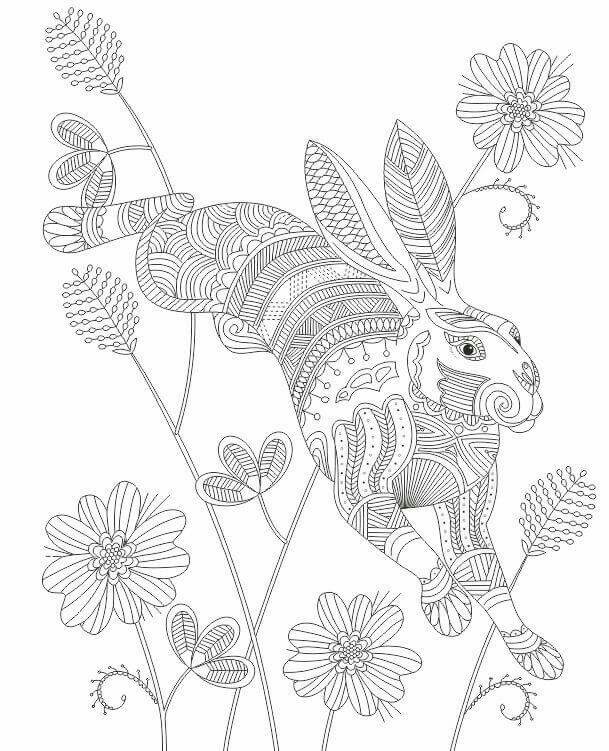 609x751 Advanced Coloring Jack Rabbit Page Animal Coloring Books