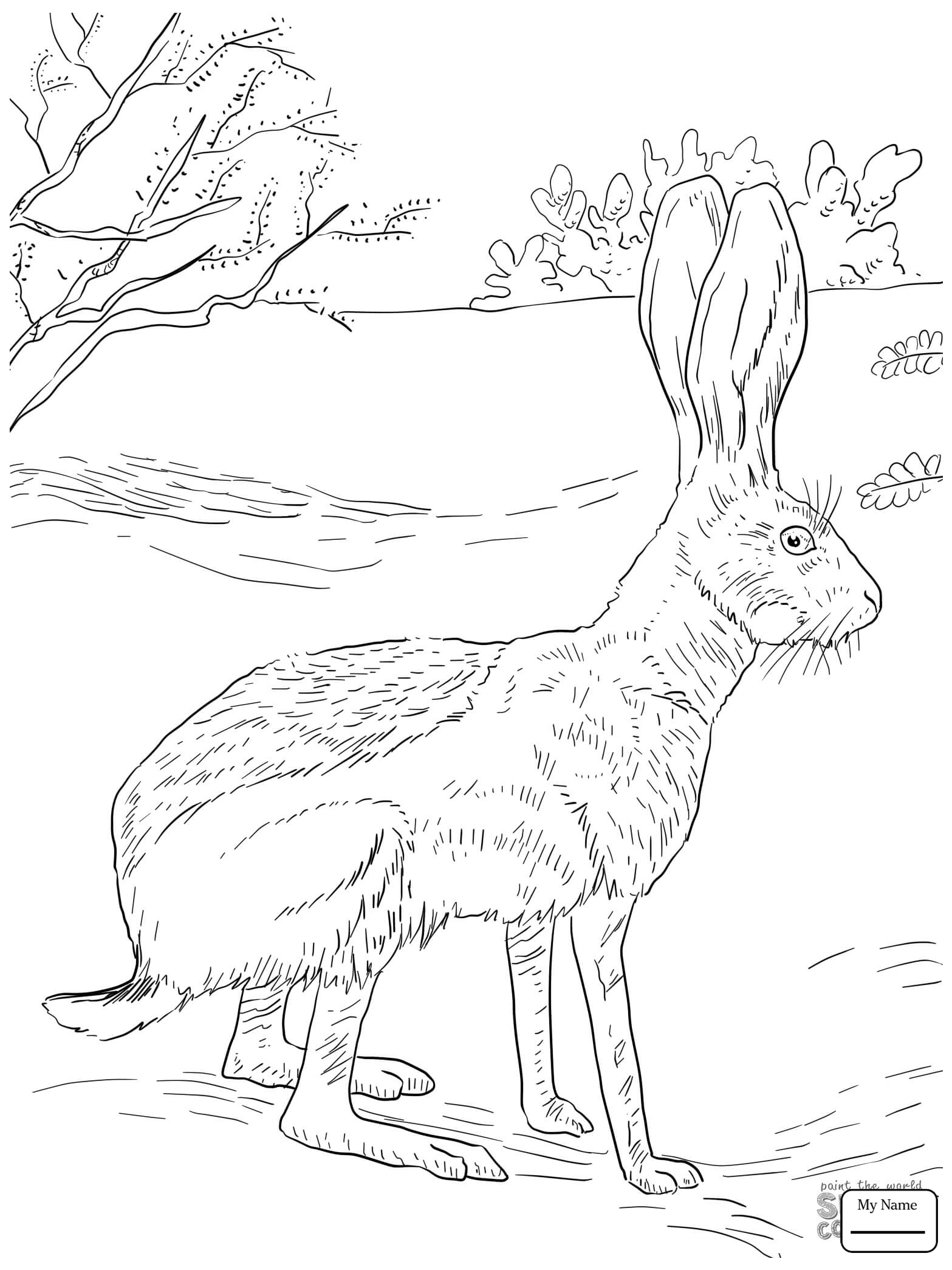 1567x2089 Antelope Jack Rabbit Mammals Hares Coloring Pages