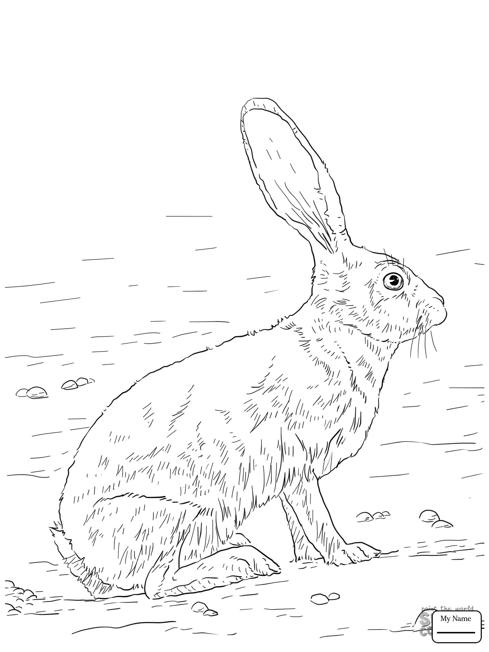 1567x2089 Hares Mammals Antelope Jack Rabbit Coloring Pages