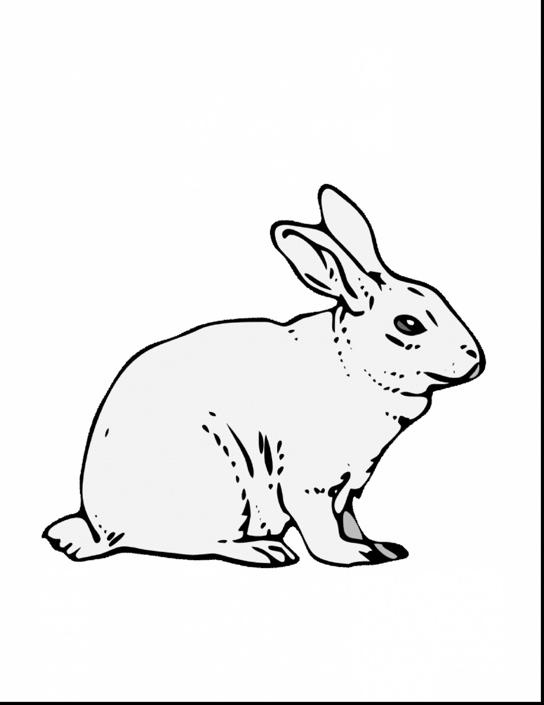 1740x2252 Unbelievable Jack Rabbit Coloring Page With Rabbit Coloring Pages