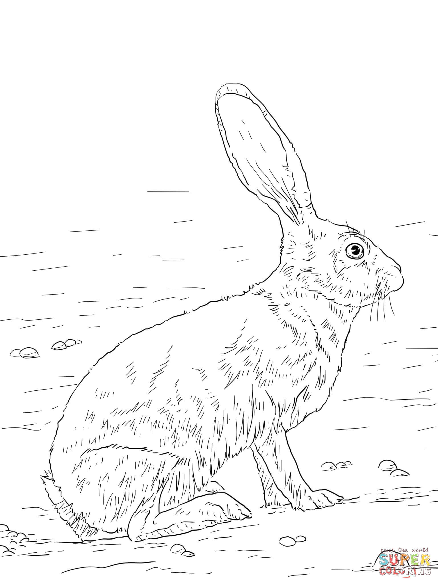 1536x2048 Black Tailed Jackrabbit Coloring Page Free Printable Coloring Pages