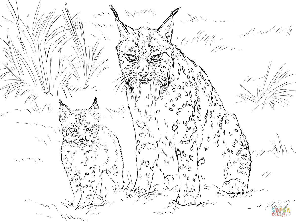 1199x899 Bobcat Coloring Pages For Adults Awesome Coloring Pages For Adults