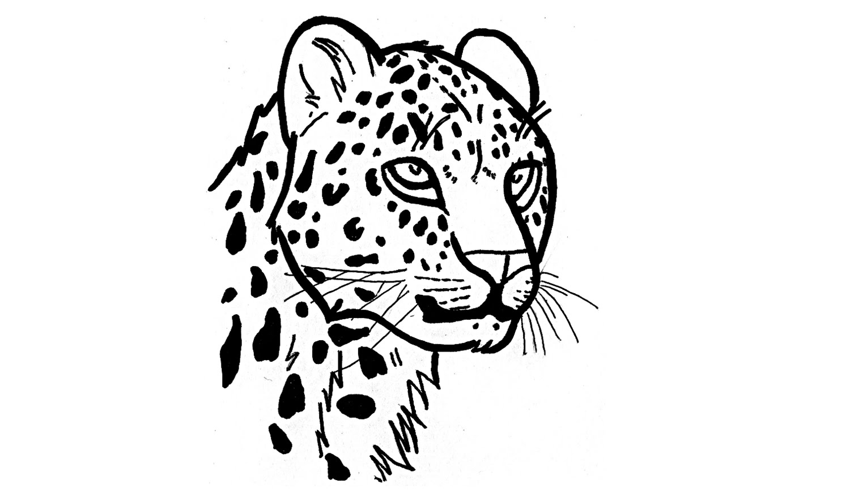 1500x885 How To Draw A Jaguar (Animals)