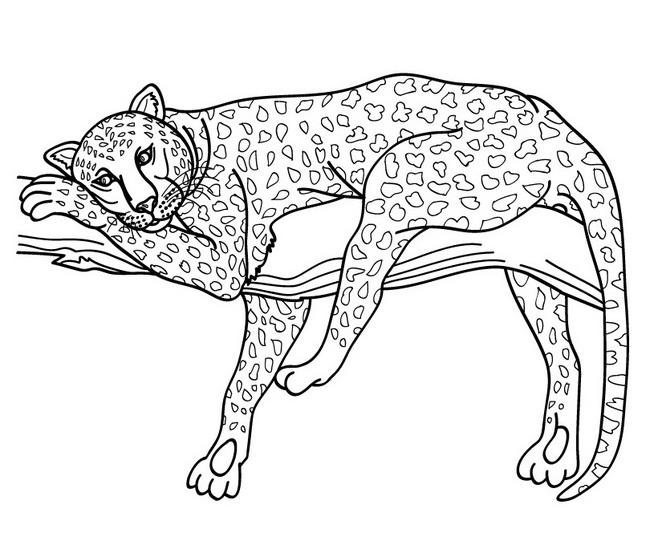 Jaguar Animal Drawing at GetDrawings.com | Free for personal use ...