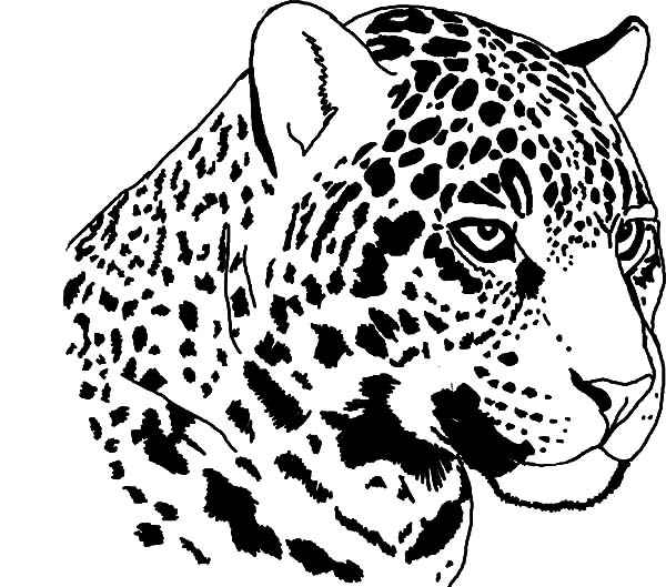 Jaguar Animal Drawing at GetDrawings | Free download