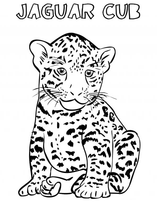 Jaguar Animal Drawing at GetDrawings Free for