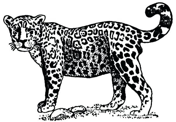 600x418 Minimalist Jaguar Coloring Pages Crayola Photo Page Printable